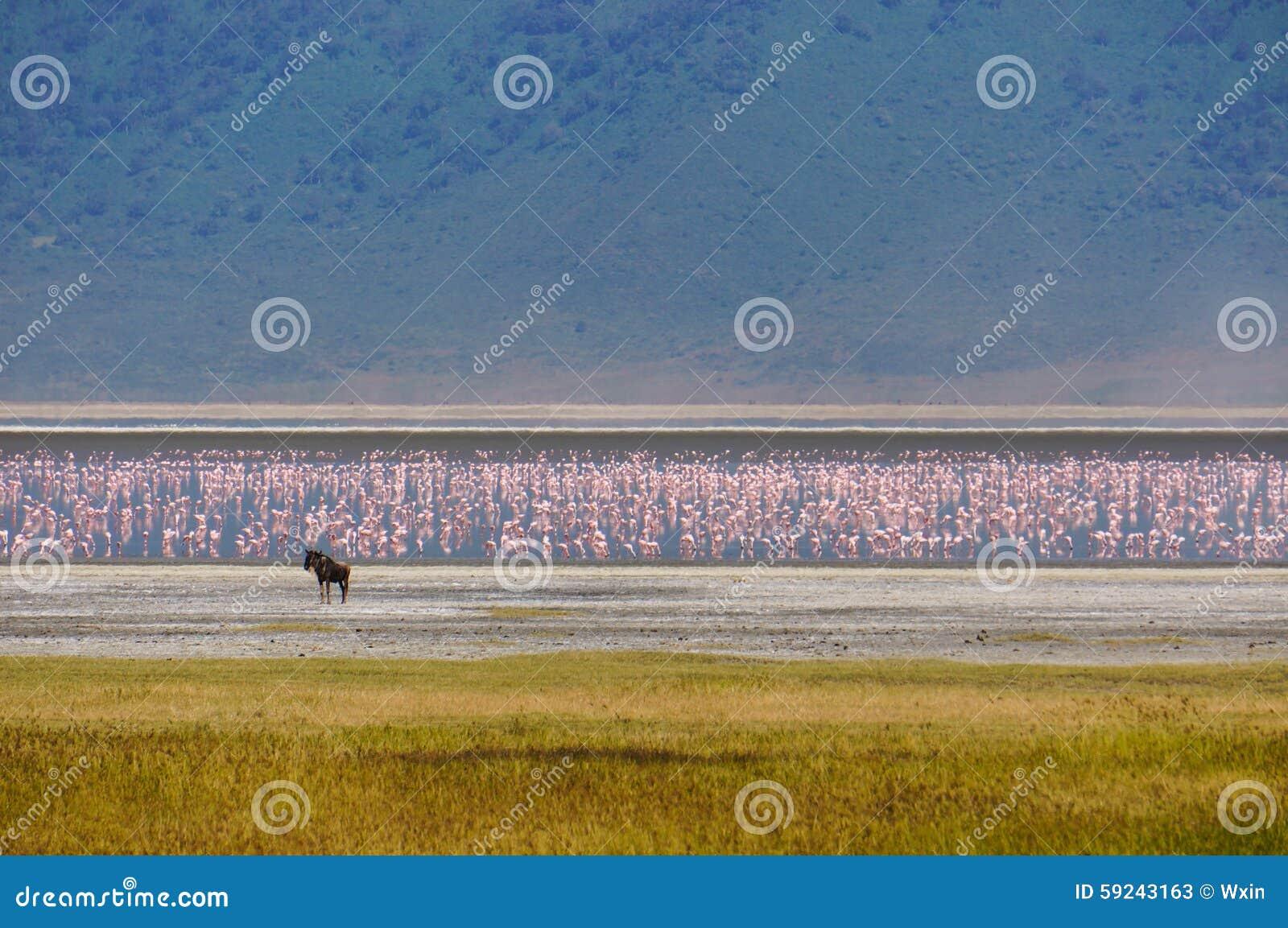 Download En santuario de fauna imagen de archivo. Imagen de áfrica - 59243163