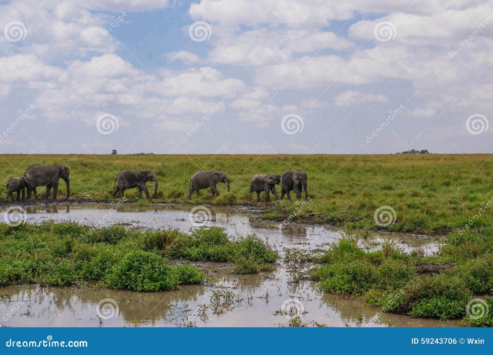 Download En santuario de fauna foto de archivo. Imagen de prado - 59243706