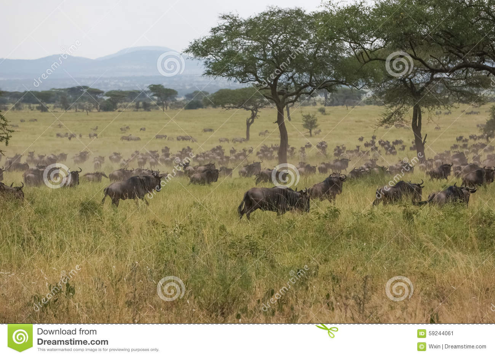 Download En santuario de fauna imagen de archivo. Imagen de heno - 59244061