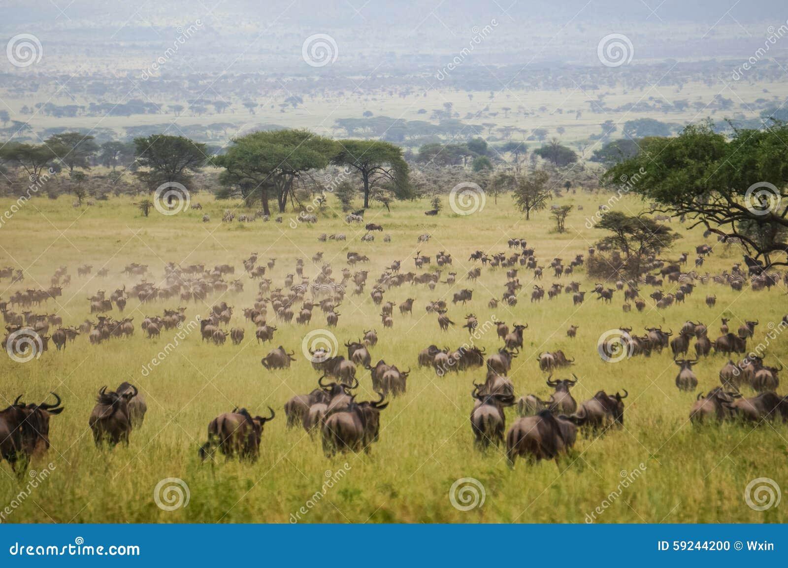 En santuario de fauna