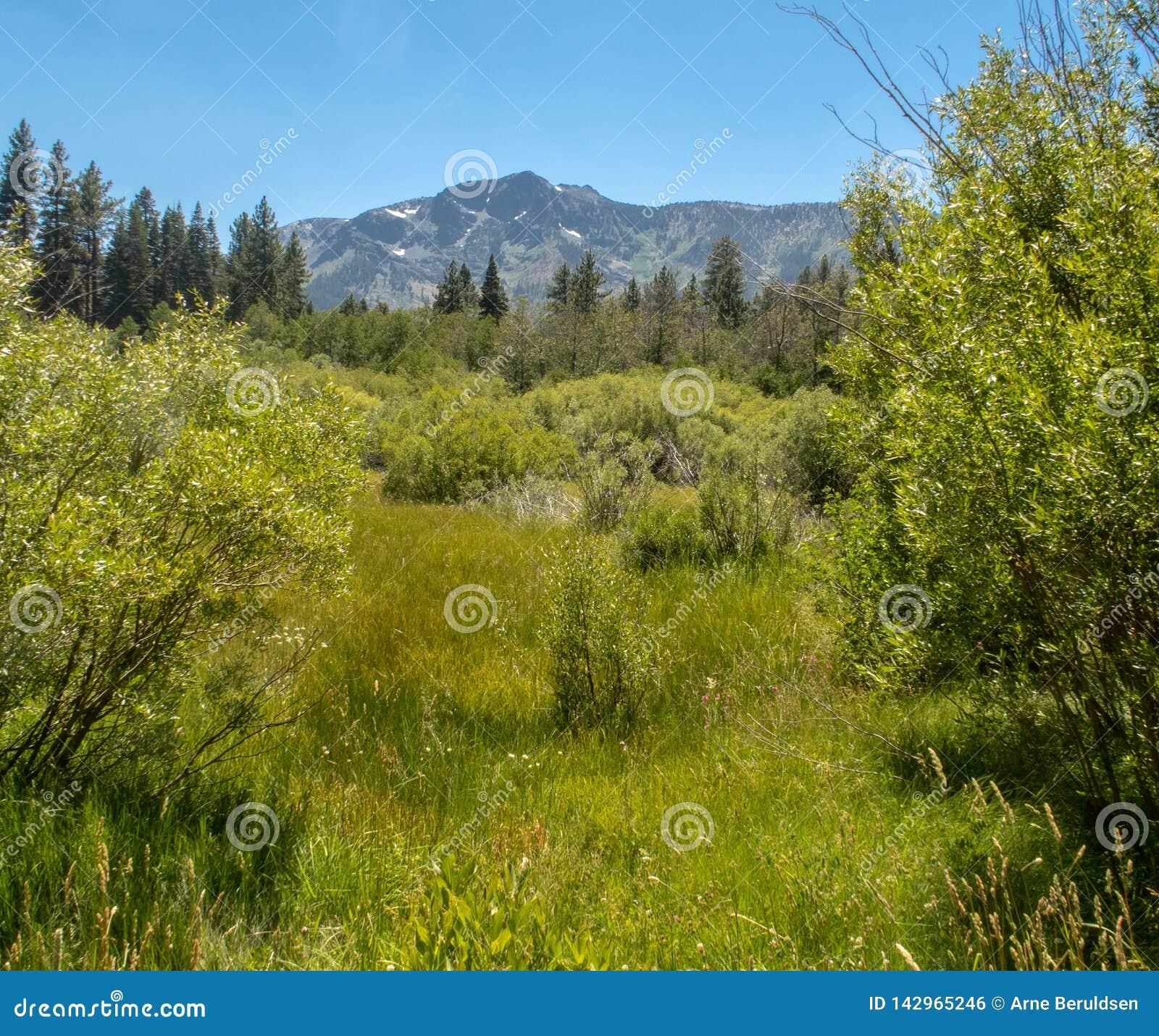 En scenisk sikt nära Lake Tahoe