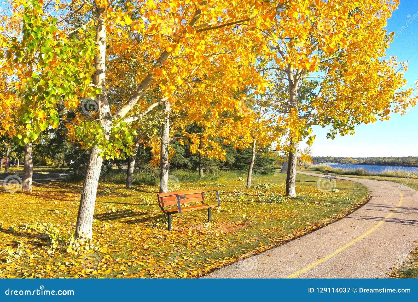 En sceniska Autumn Pathway med ljus guling och bladguld