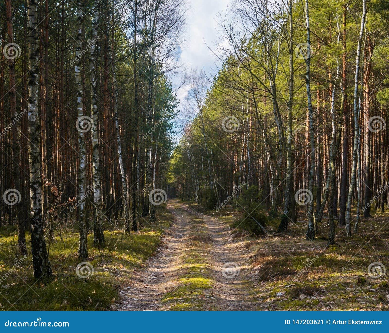 En skog i bygden i Europa
