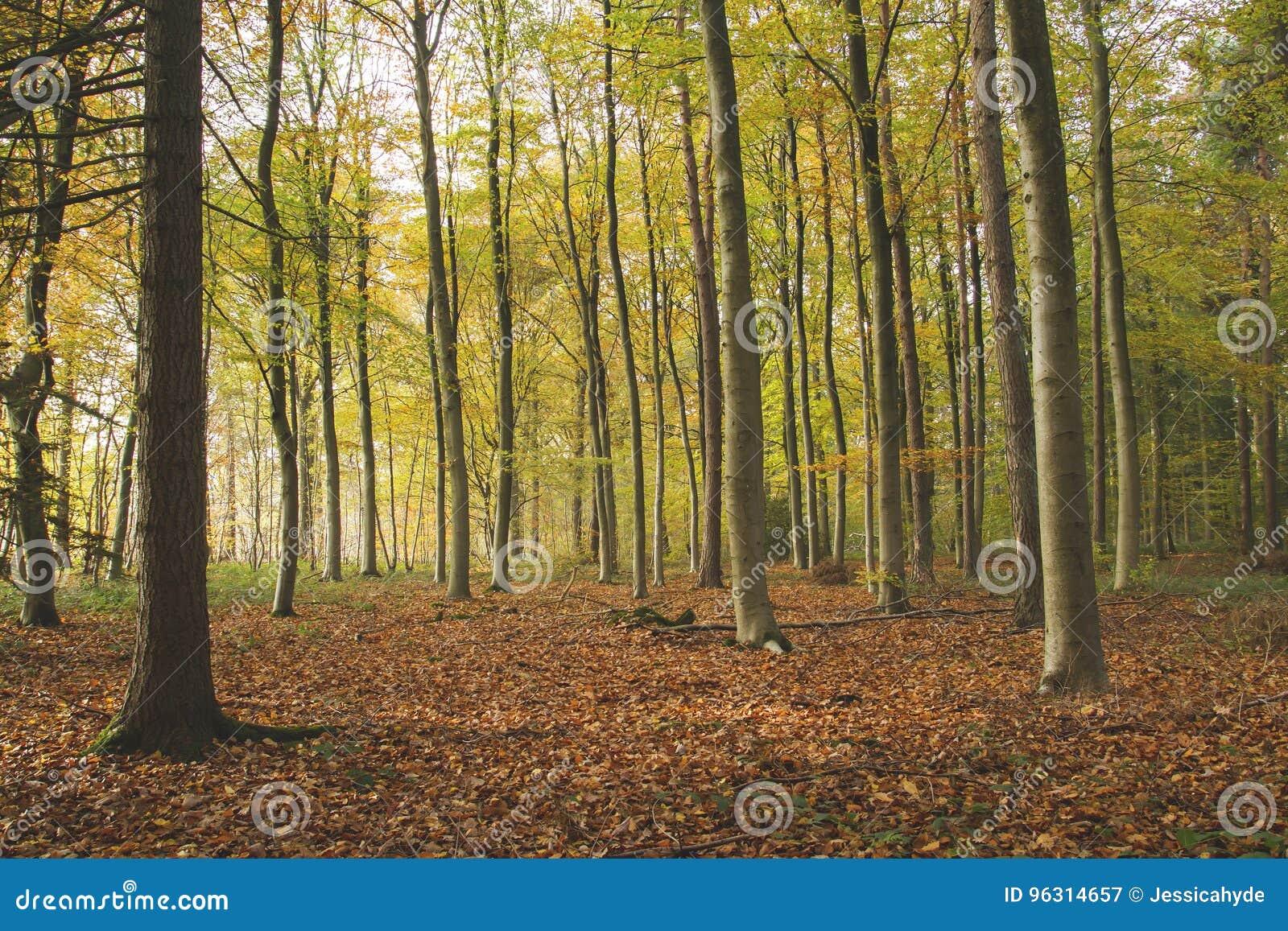 En skog i höst