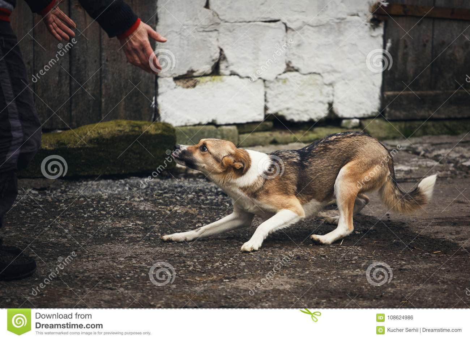 En skrämd hemlös hund på gatan