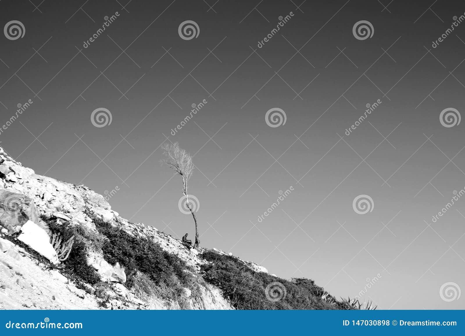 En skugga i en öken