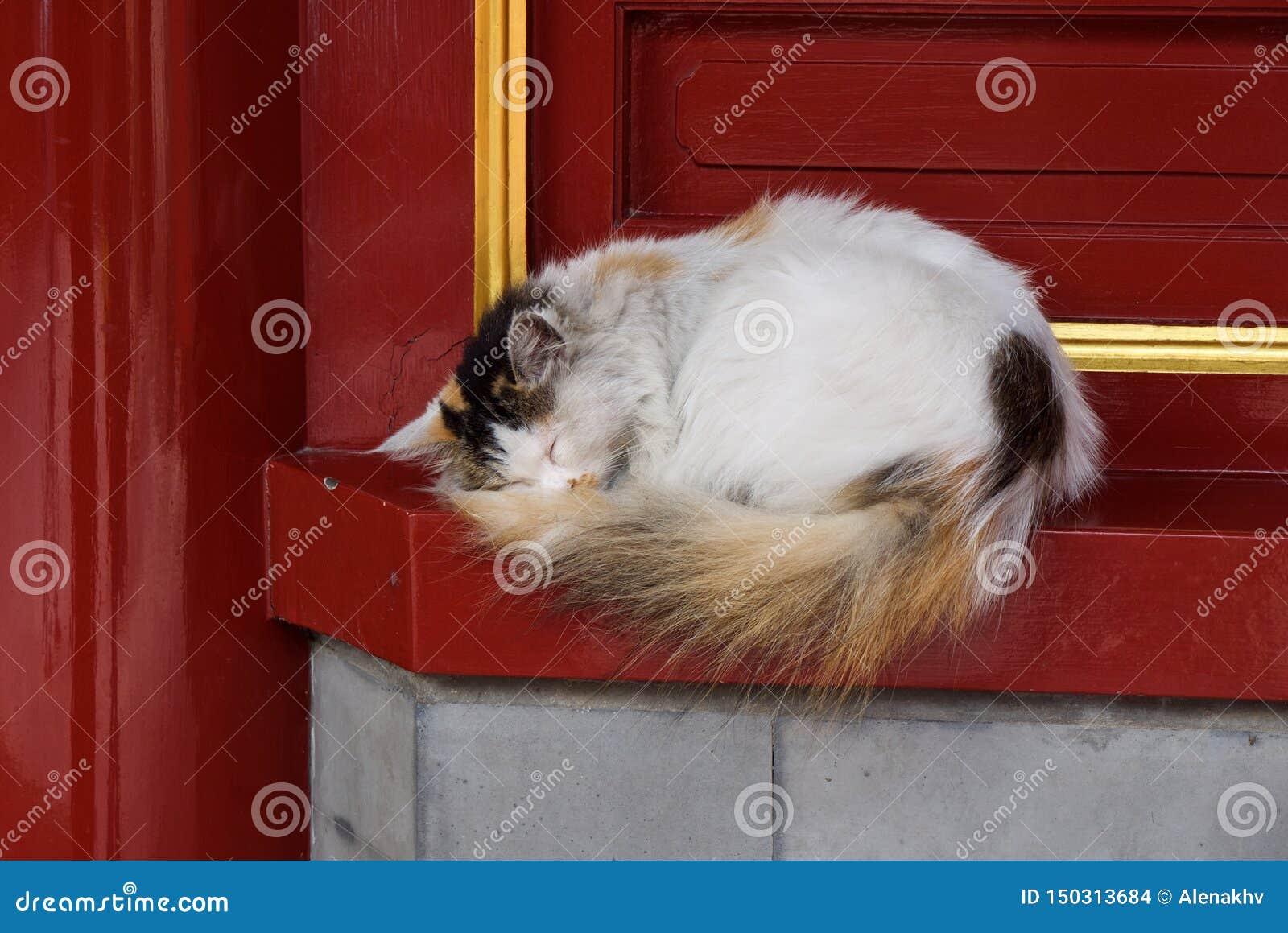 En smutsig hemlös vit fluffig katt sover mot en röd vägg med en guld- prydnad