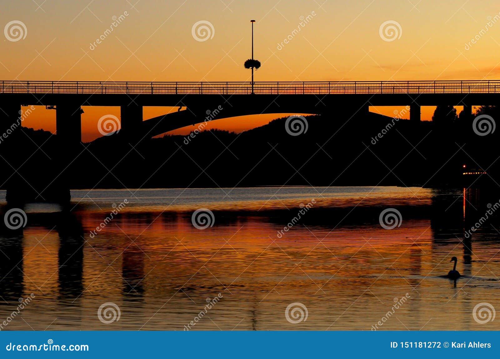 En and som simmar i floden på solnedgången