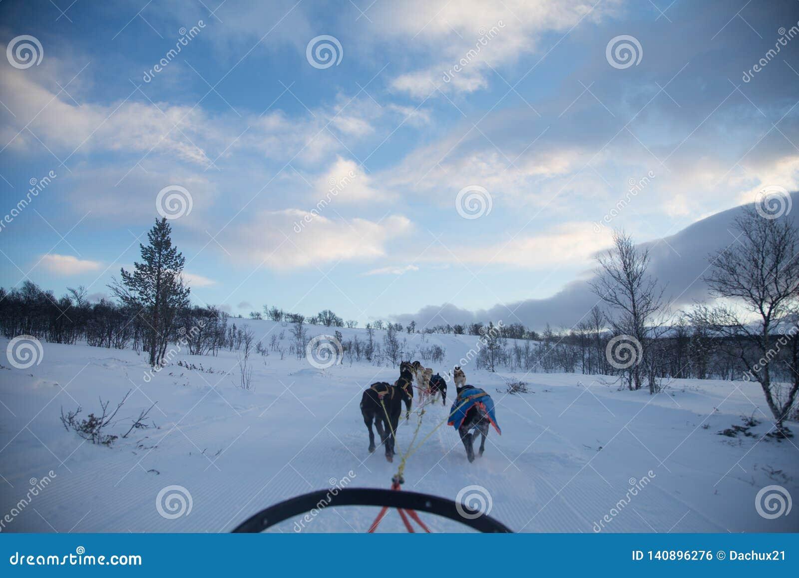 En spännande erfarenhet som rider en hundsläde i vinterlandskapet Snöig skog och berg med ett hundlag