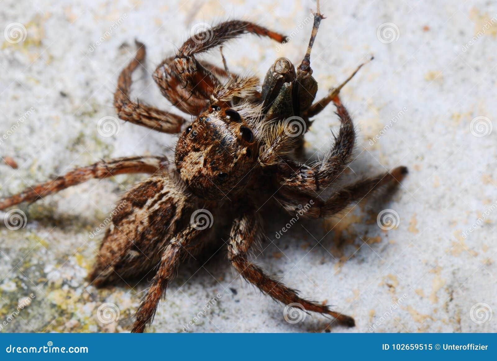 En spindel fångade ett rov