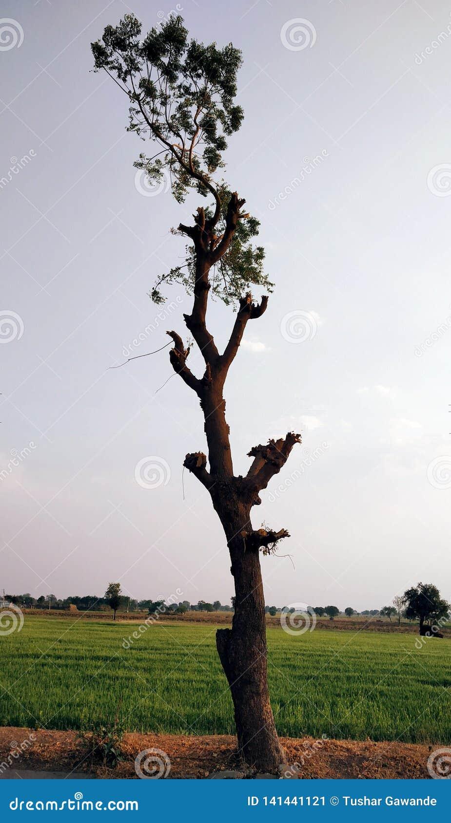 En ställning för neemträd fast