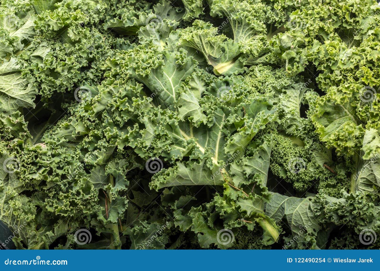 En sund ny lockig grönkål