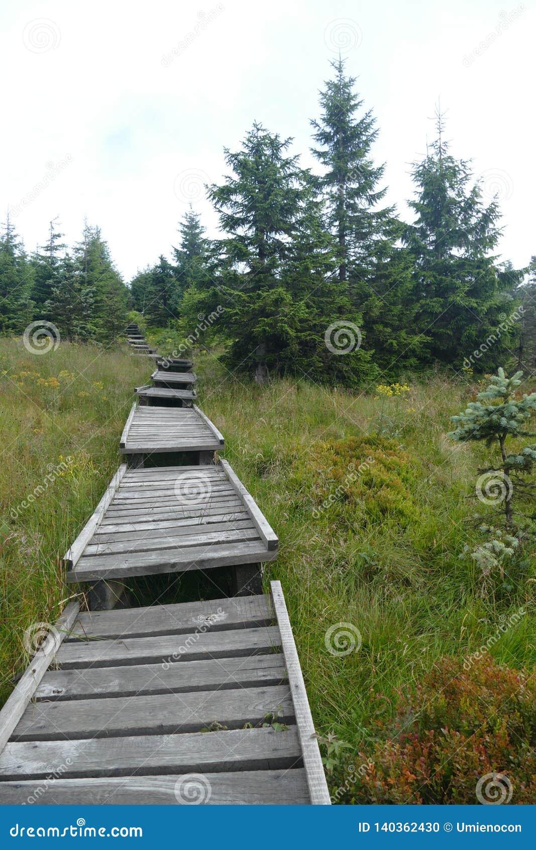 En träbergbana till och med vårarna av den Jizera floden