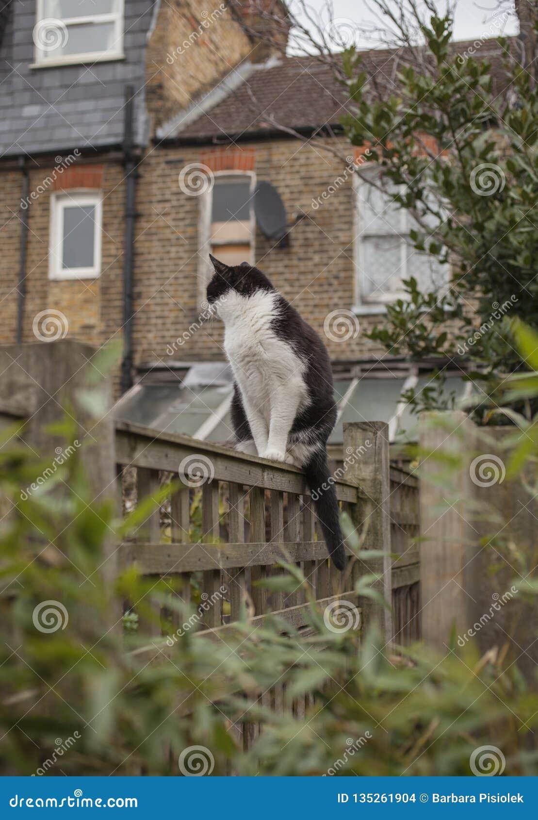 En trädgård i London, England, UK - en katt på ett staket; en molnig dag