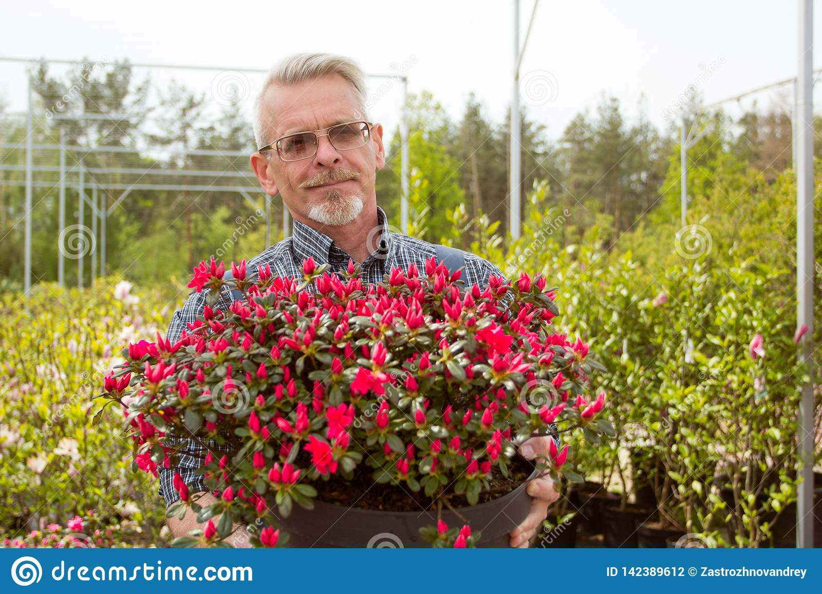En trädgårdsmästare som rymmer en stor kruka med röda blommor