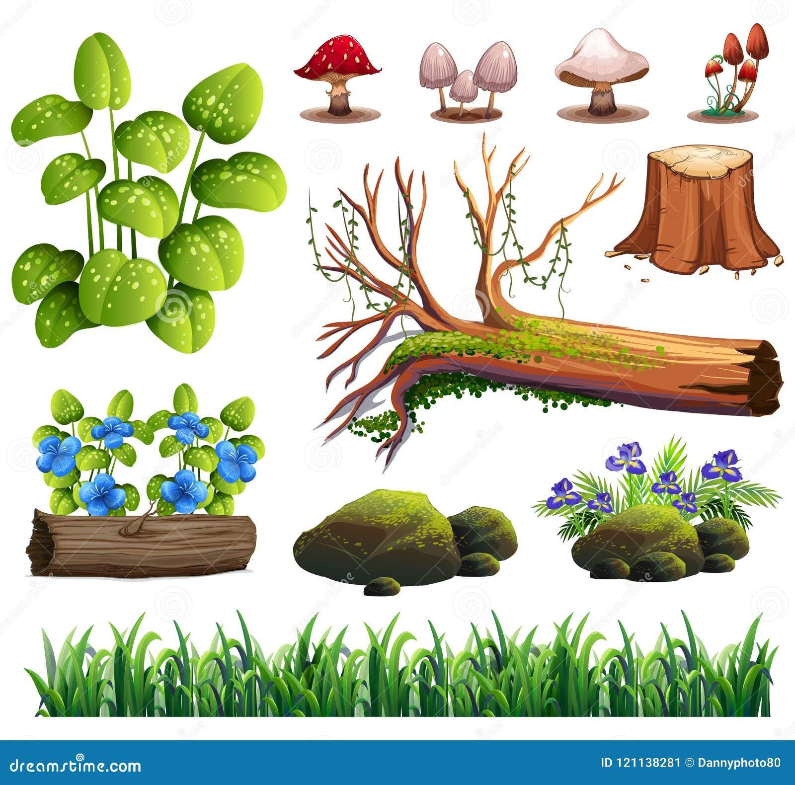 En uppsättning av Forest Element