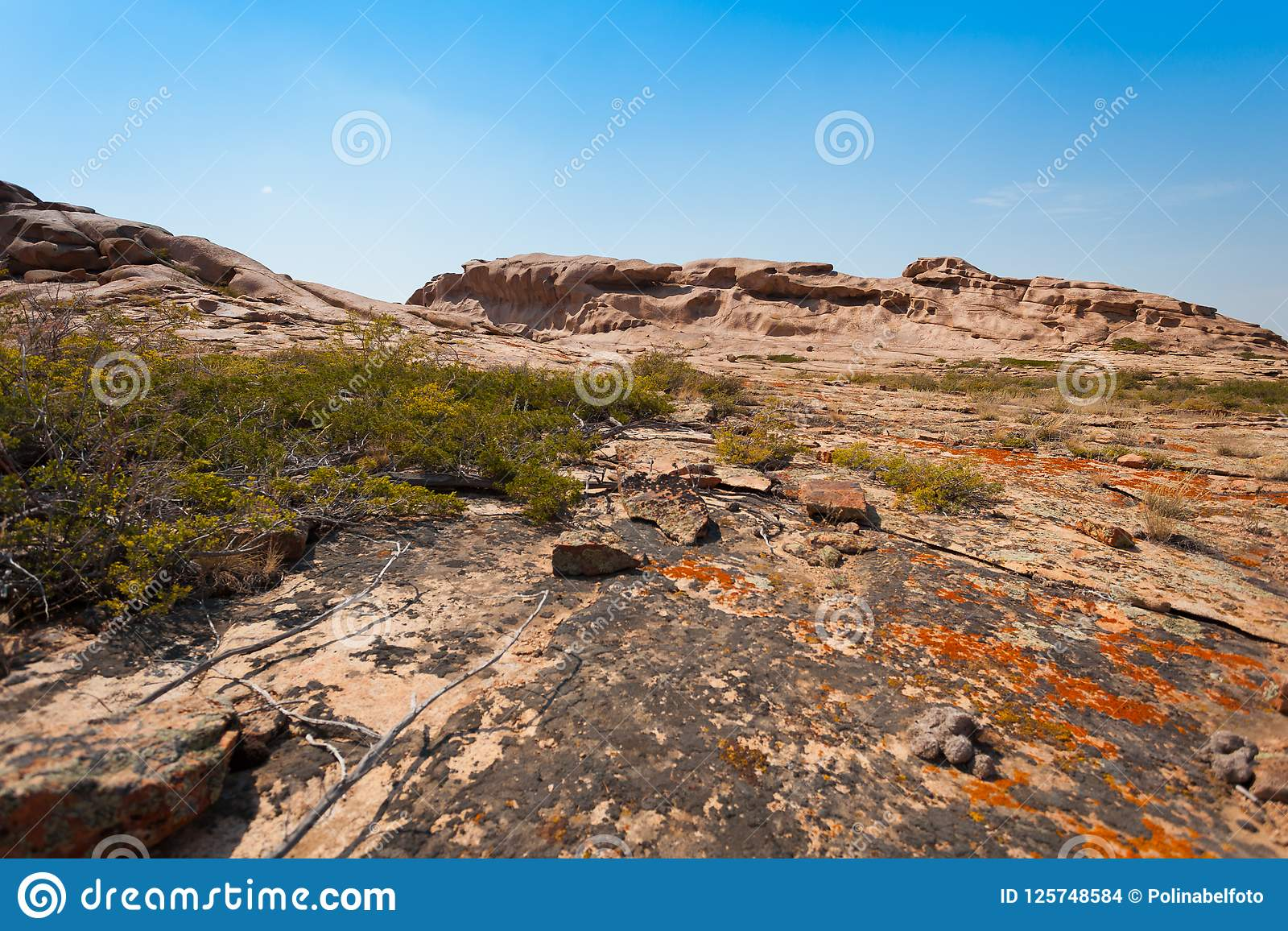 En växer på stenar med laven och mossa på bakgrunden av berg