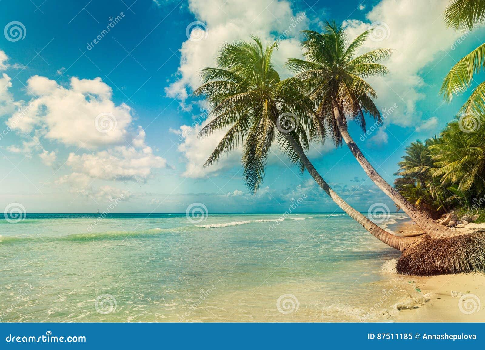 Encalhe com palma de coco, ilha tropical desinibido