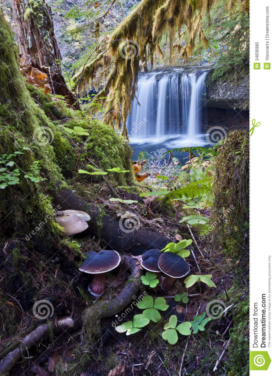 enchanted forest with waterfall stock image image of mossy
