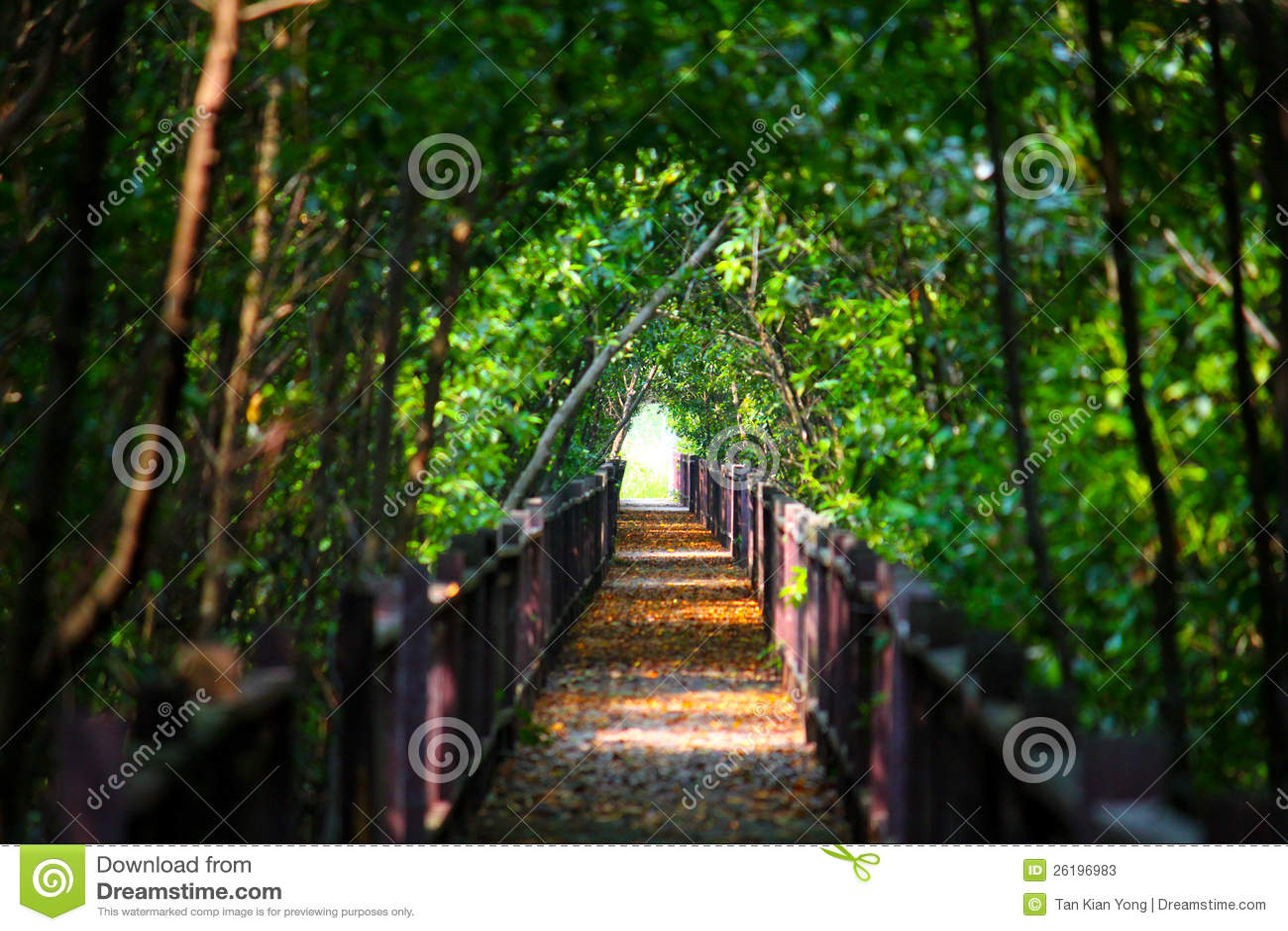 Enchanted Garden Alley Stock Photos Image 26196983