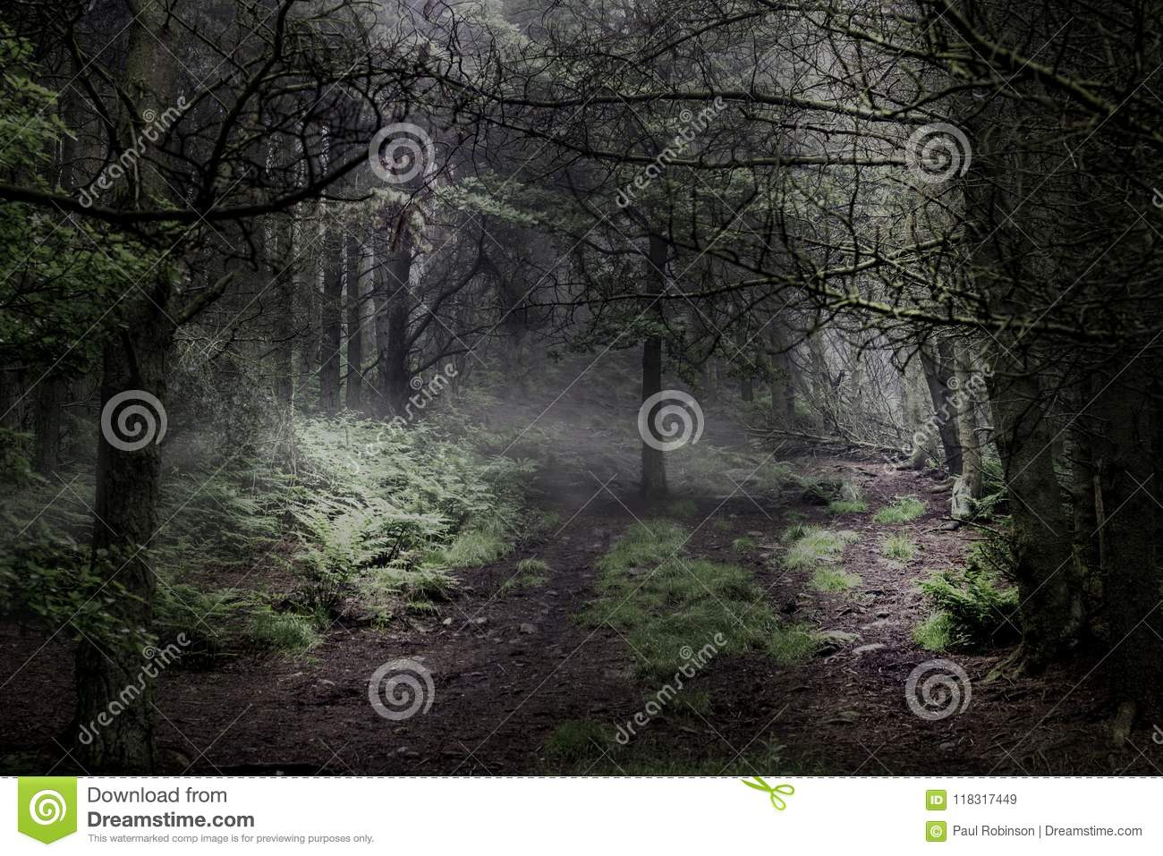 Enchanted magical forest.