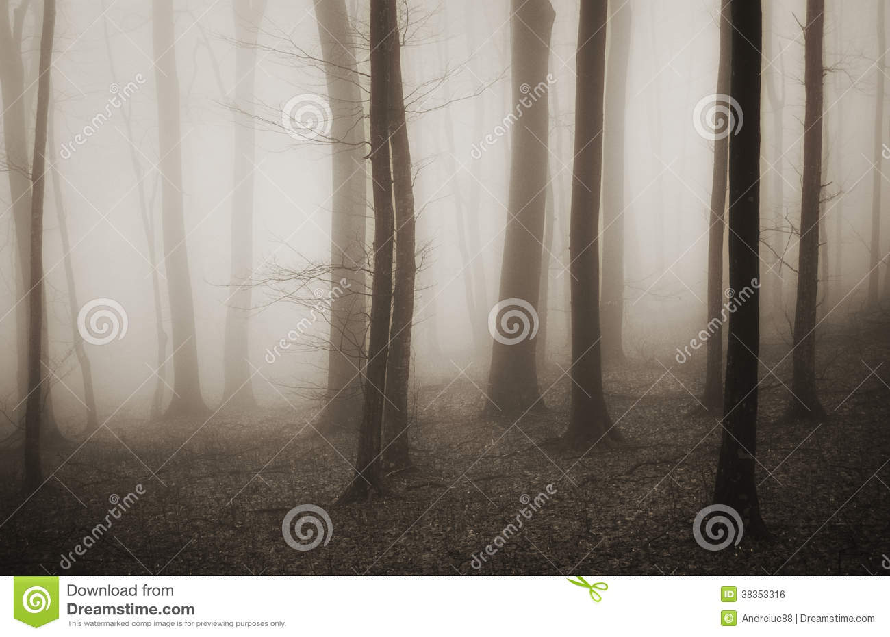 mysterious forest in winter - photo #7