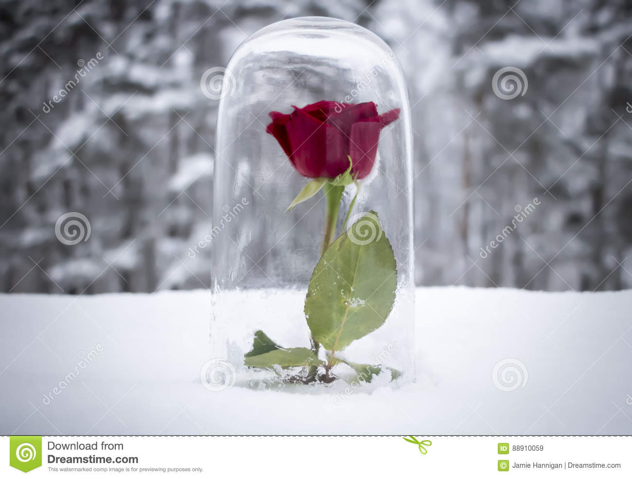 Enchanted red rose under glass stock image image 88910059 for Rose under glass