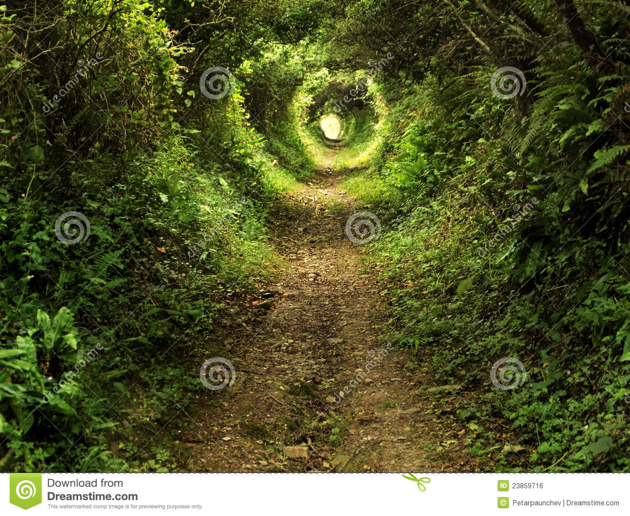 Enchanted tunnel path in the forest