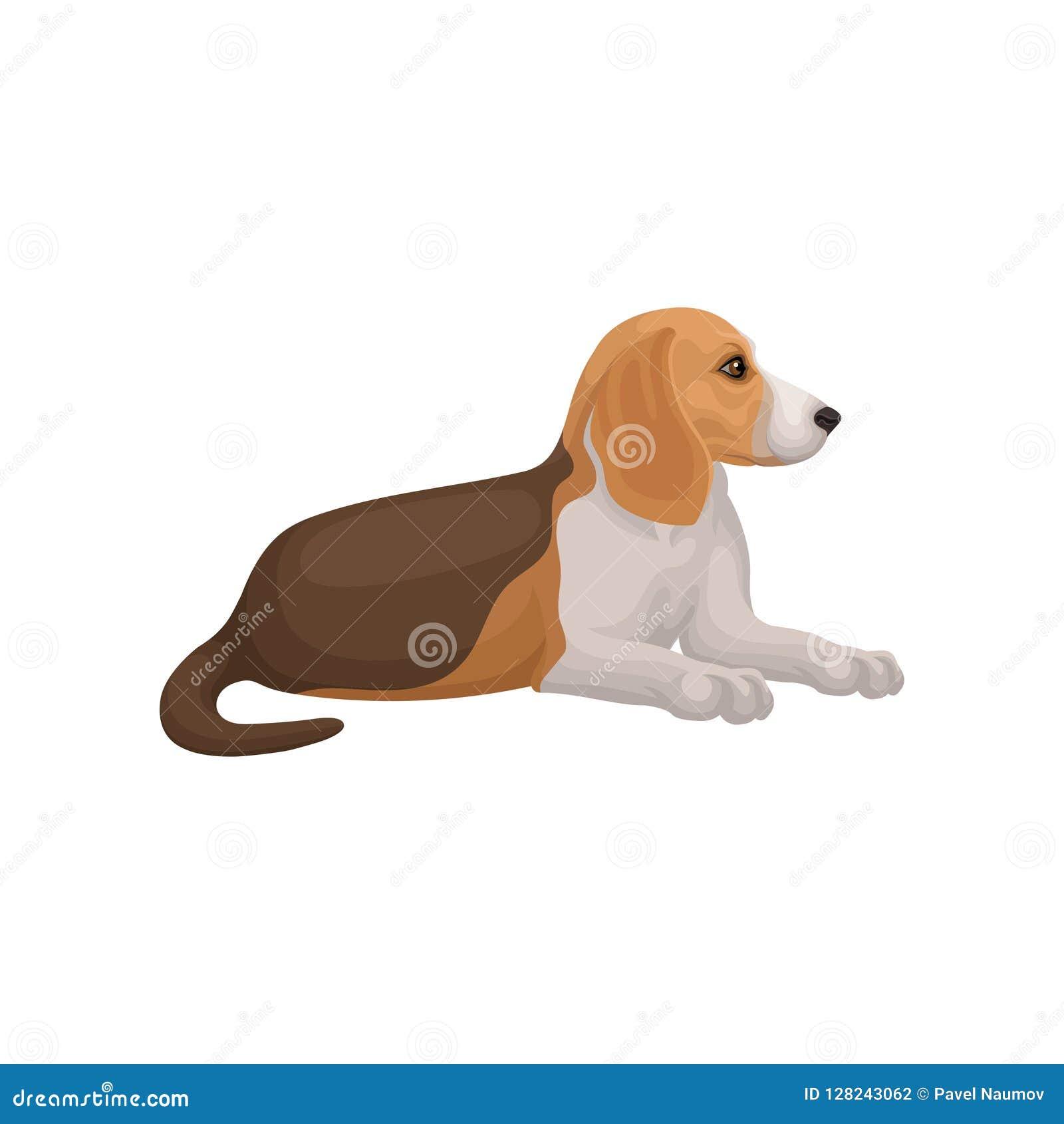 Encontro do cão do lebreiro isolado no fundo branco Animal doméstico com cabelo curto Vetor liso para anunciar o cartaz de