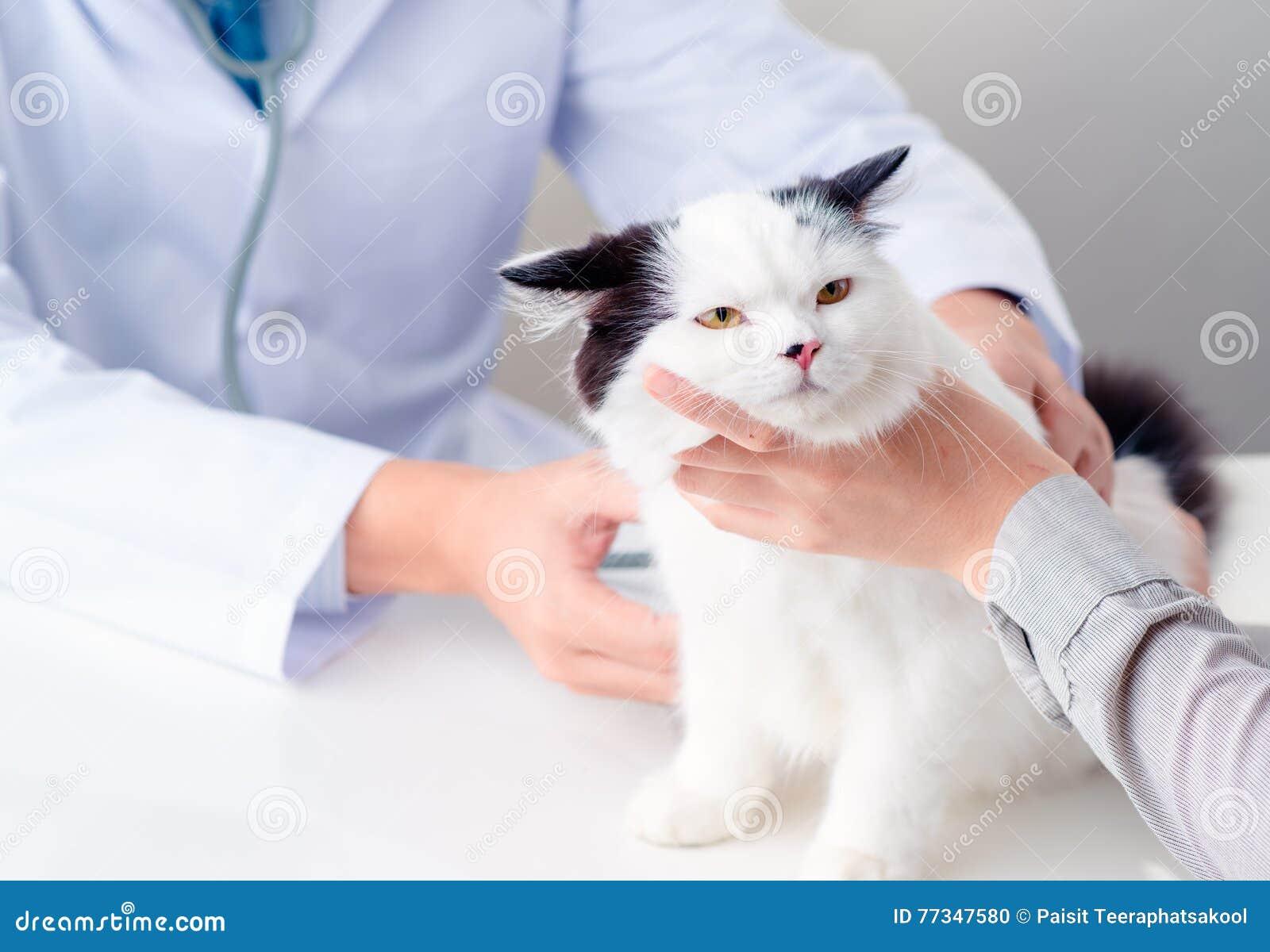 Encuesta veterinaria