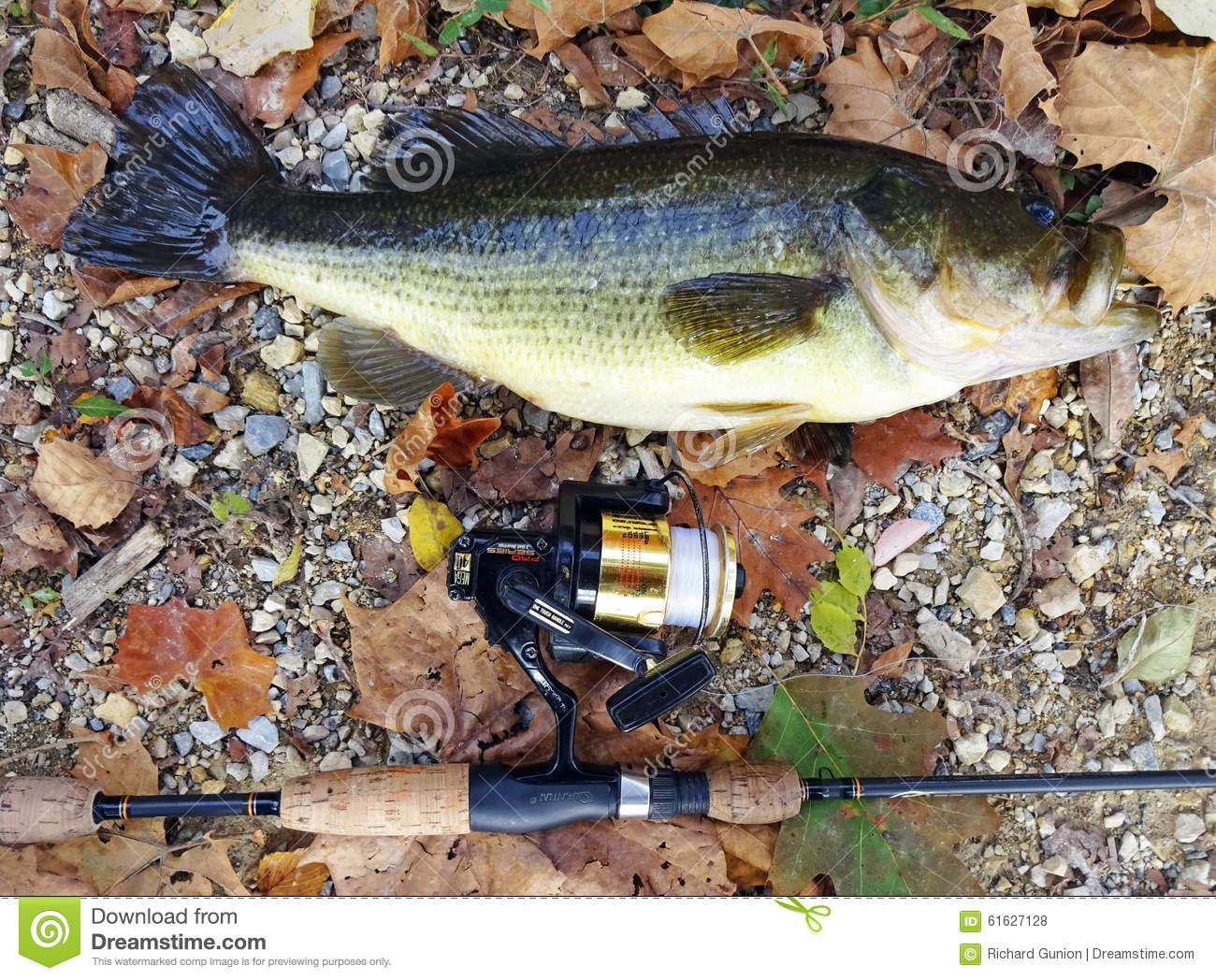 End of season largemouth bass editorial stock photo for Bass pro shop fishing license