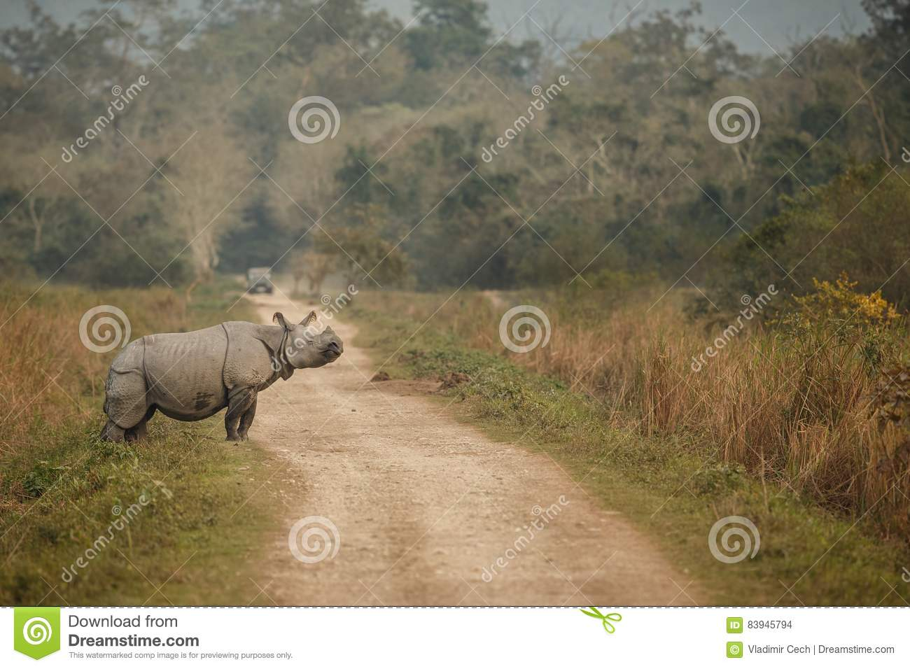 Endangered indian rhinoceros in the nature habitat