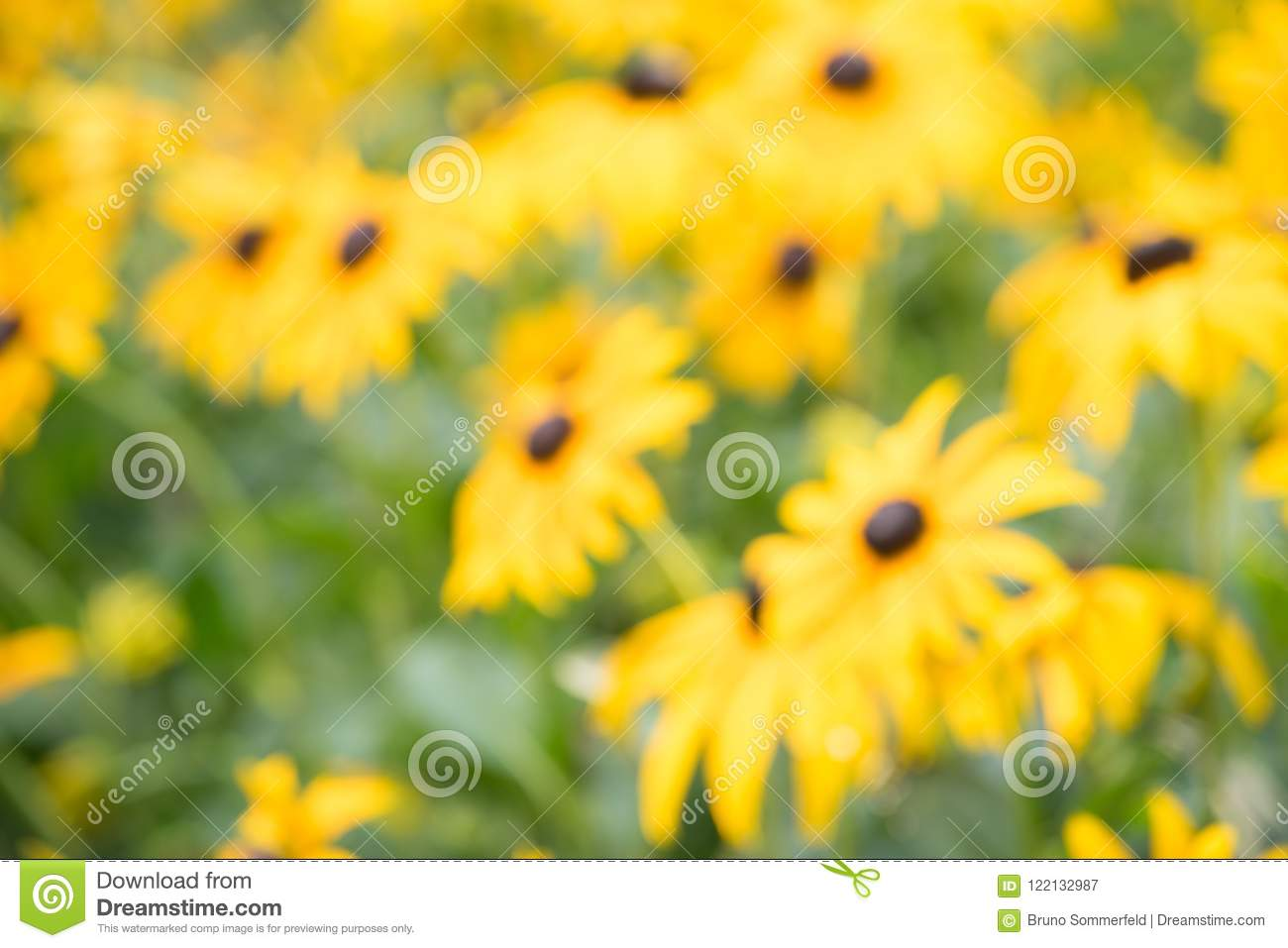 Endless Green Field Grow Fragrant Yellow Flowers Stock Image Image