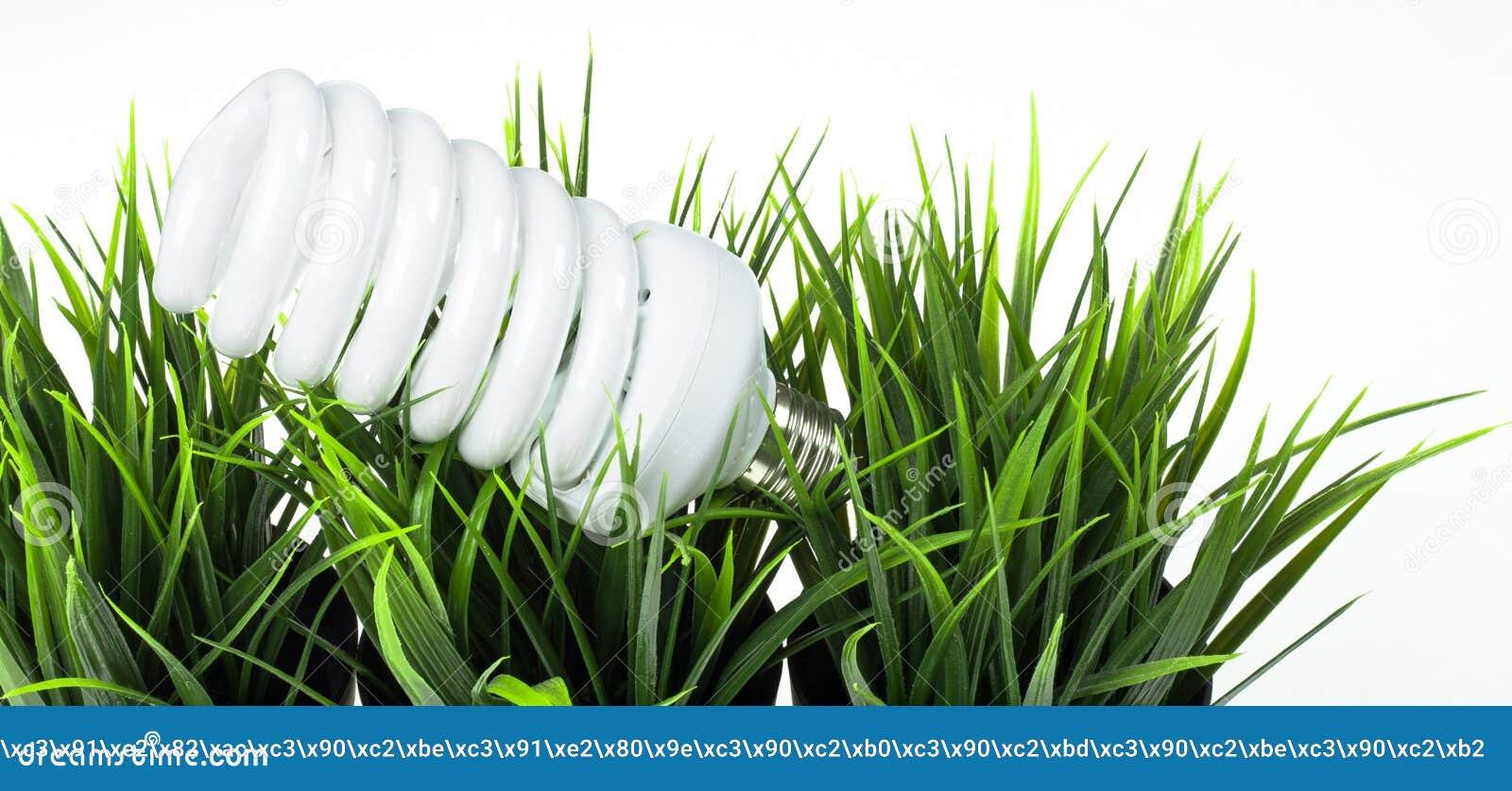 Energie - besparings gloeilamp in groen gras