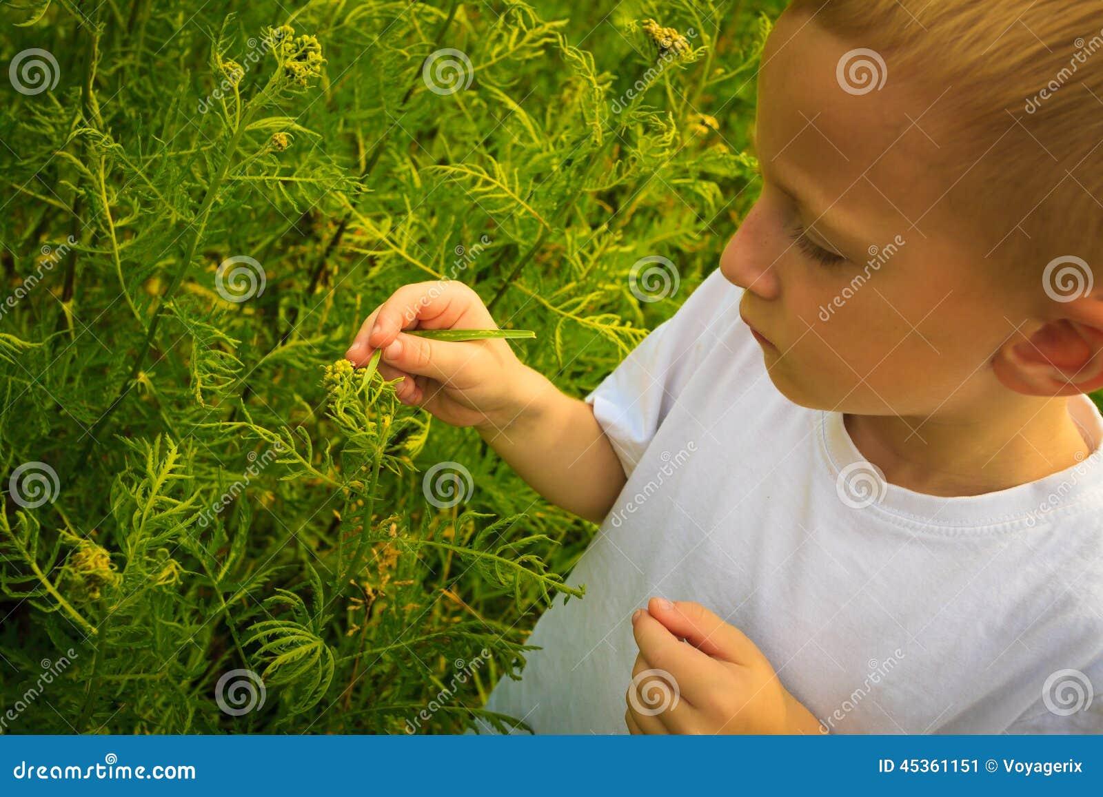 Enfant jouant sur les fleurs de examen de champ de pré