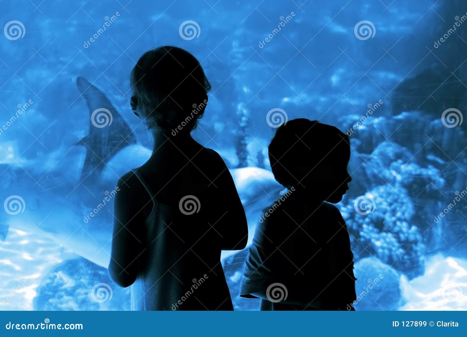 Enfants dans l aquarium
