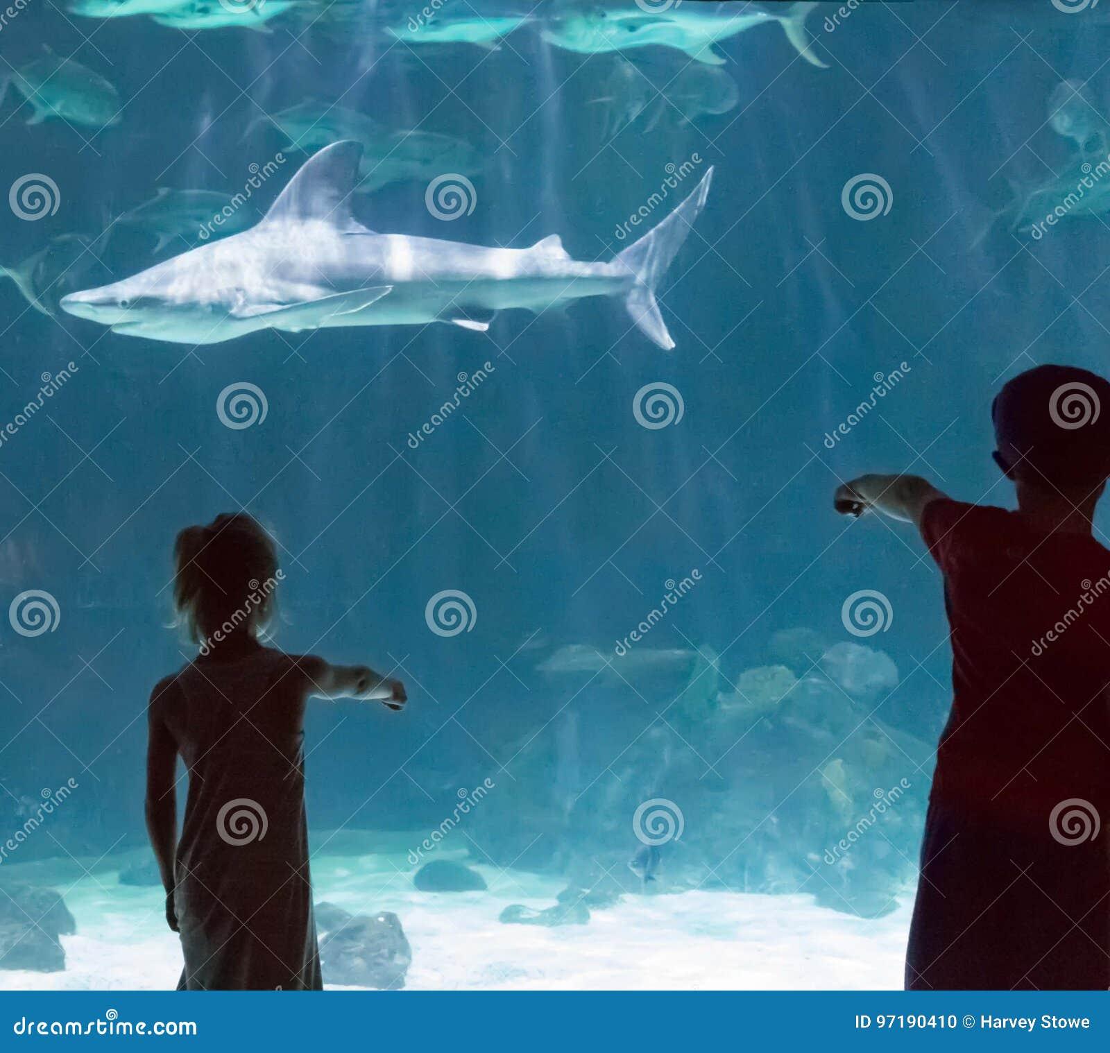 Enfants observant des requins