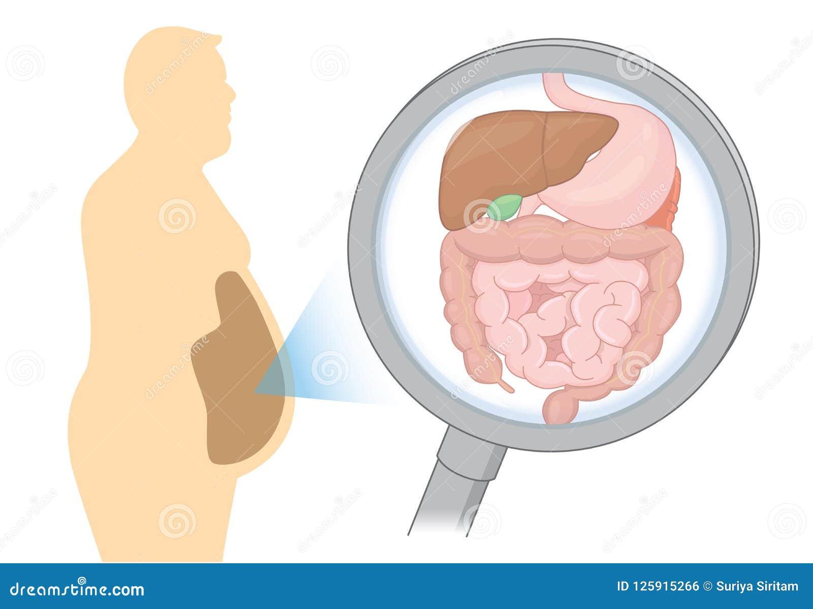 Enfoca adentro el órgano interno sobre la digestión del hombre gordo con la lupa