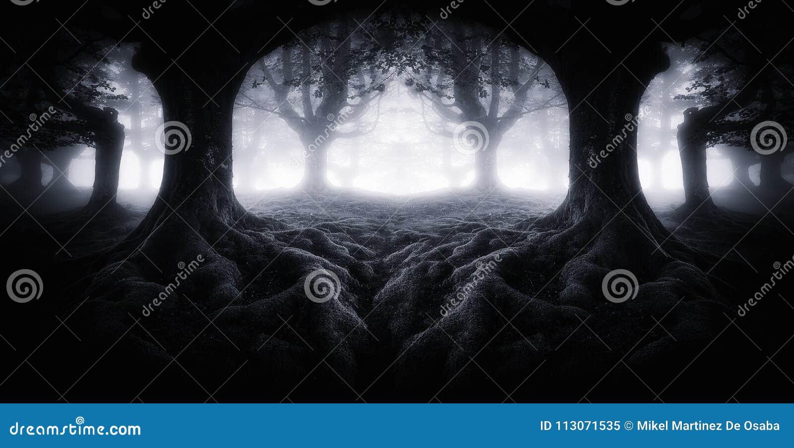 Eng donker bos met boomwortels