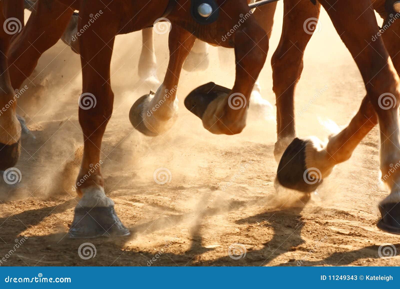 Enganches corrientes del caballo
