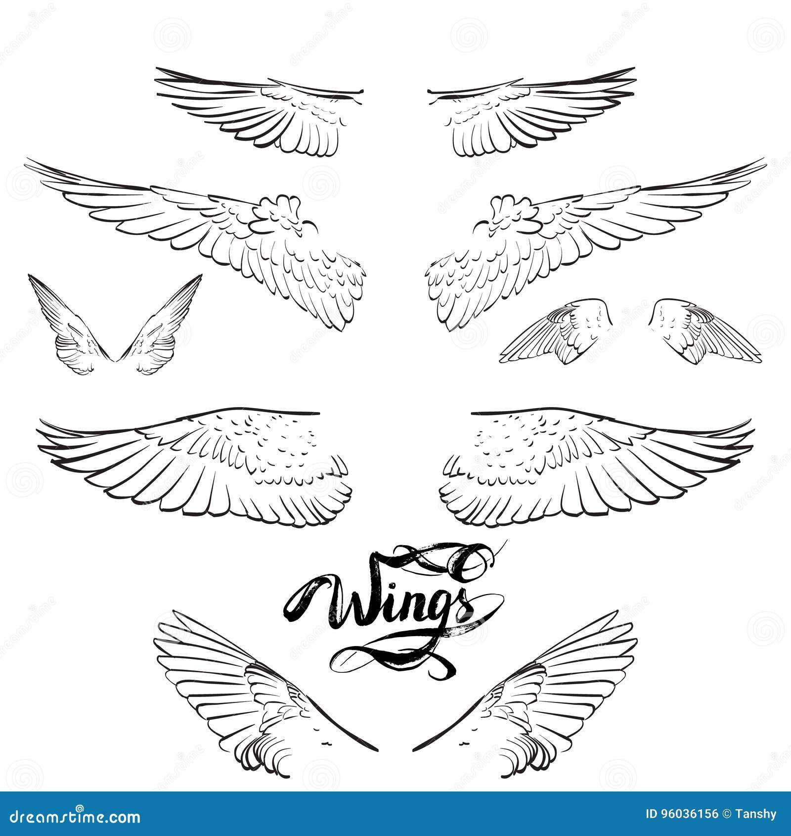 Engelenvleugels, het van letters voorzien, die vector trekken