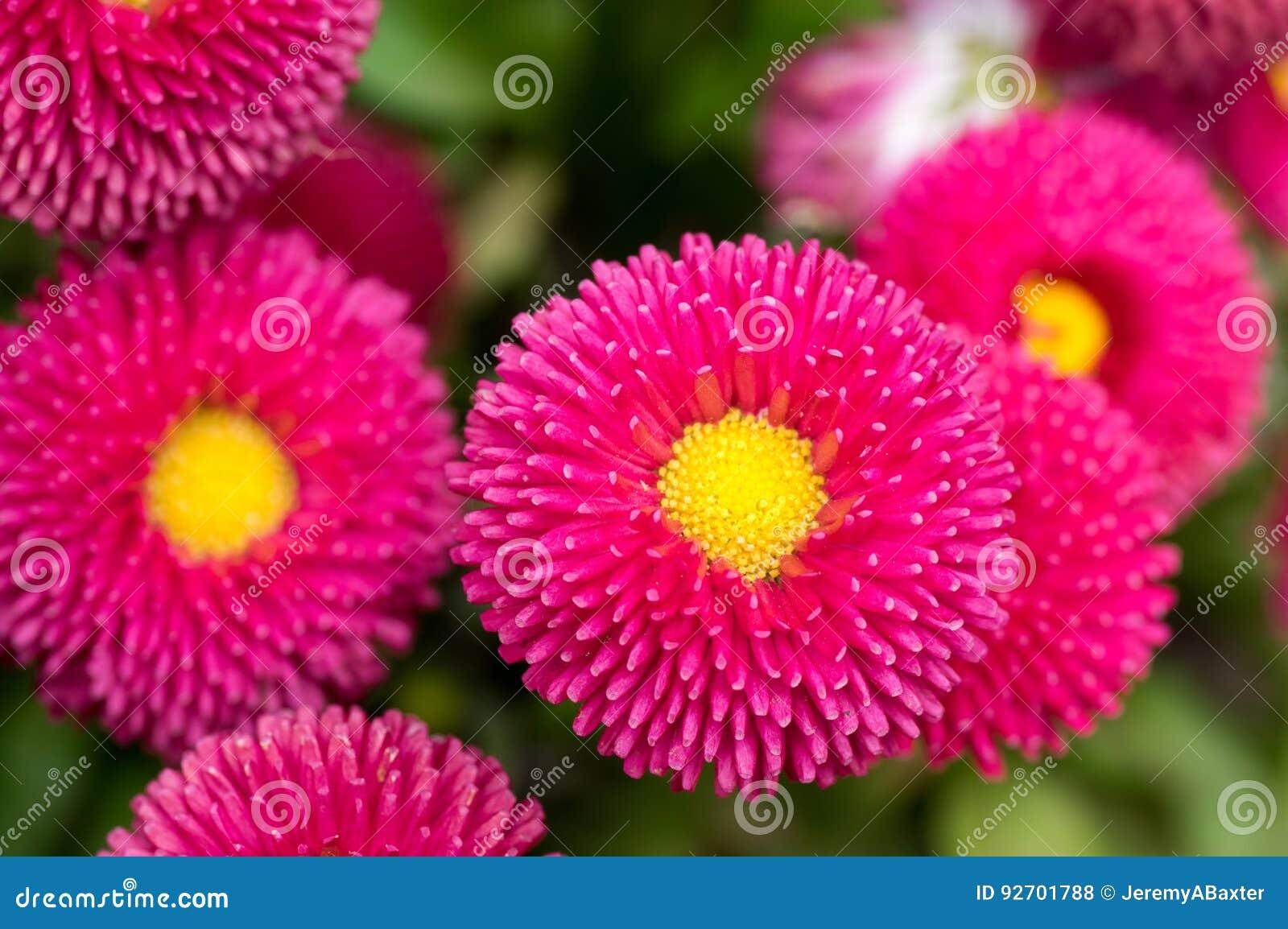 pollen englisch