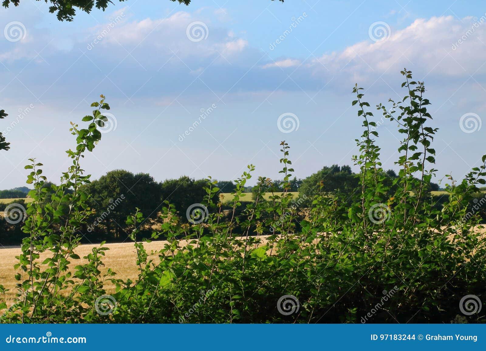 Englische Landschaft, ländliche Szene, schöne Landschaft
