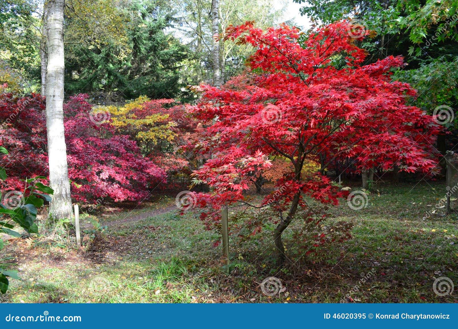 Englischer Herbst