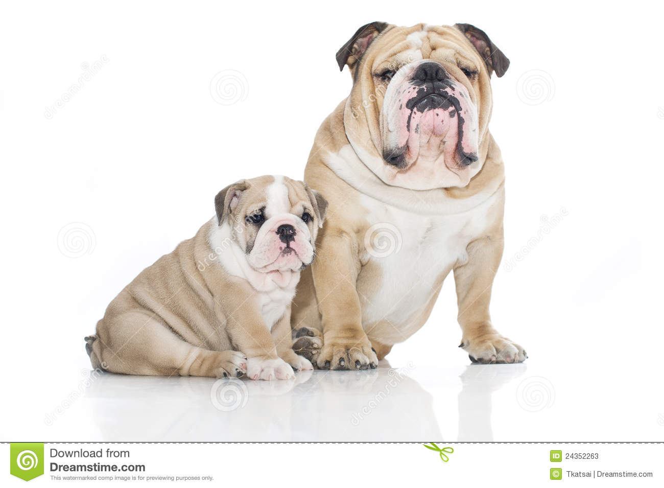 4 Best Foods to Feed Your Adult and Puppy Bulldogs