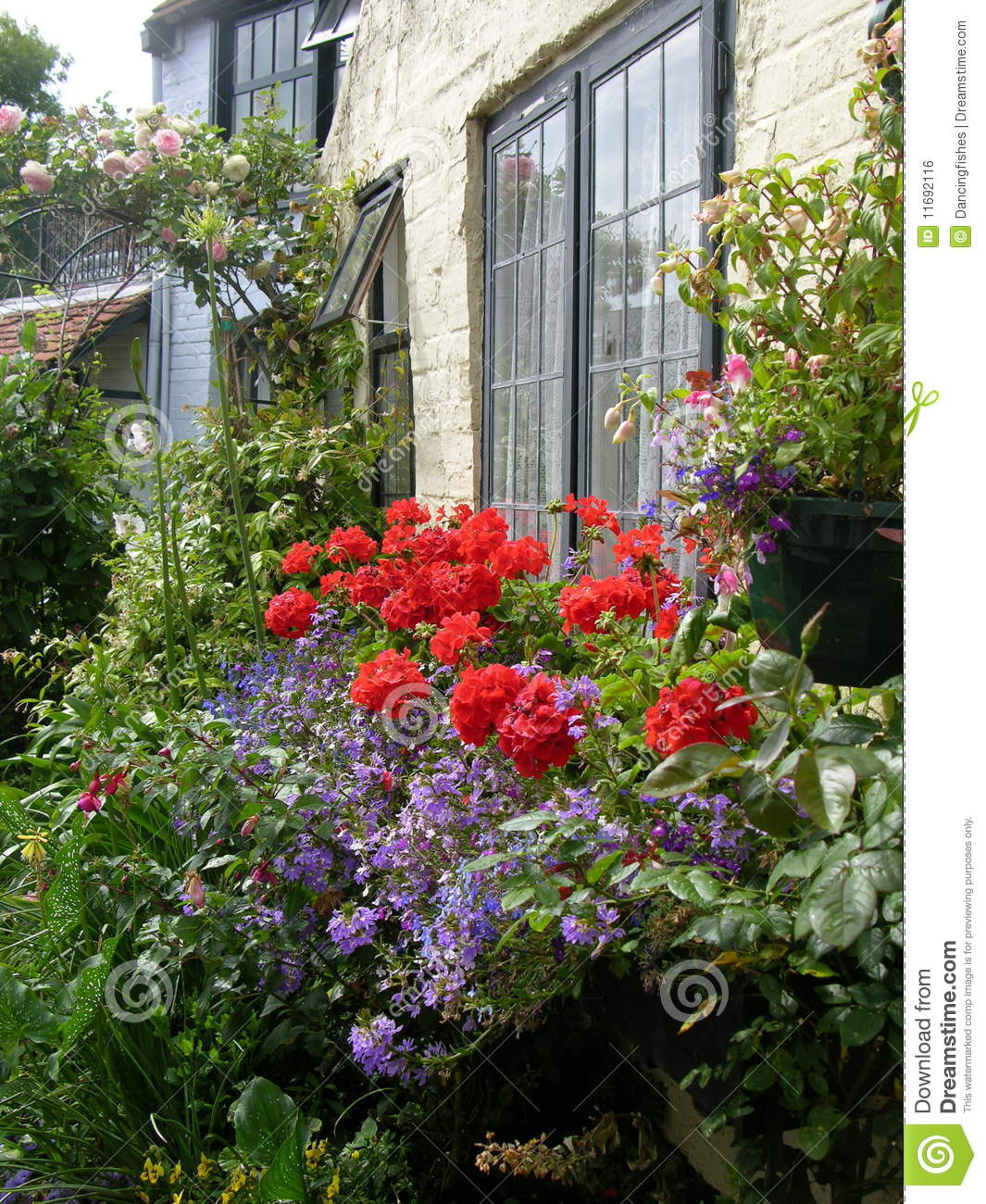English cottage garden stock photo image of geraniums for Cottage anglais