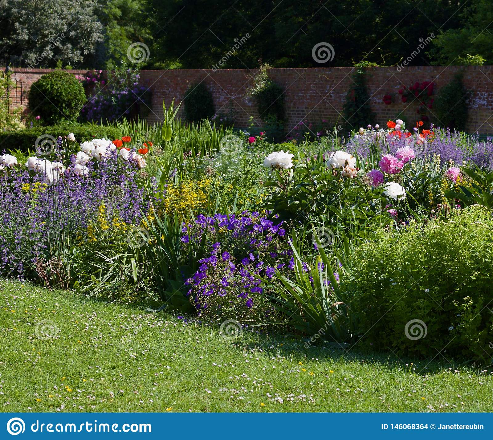English cottage garden with lawn in foreground, lush flower bed and wall in background with copy space - image