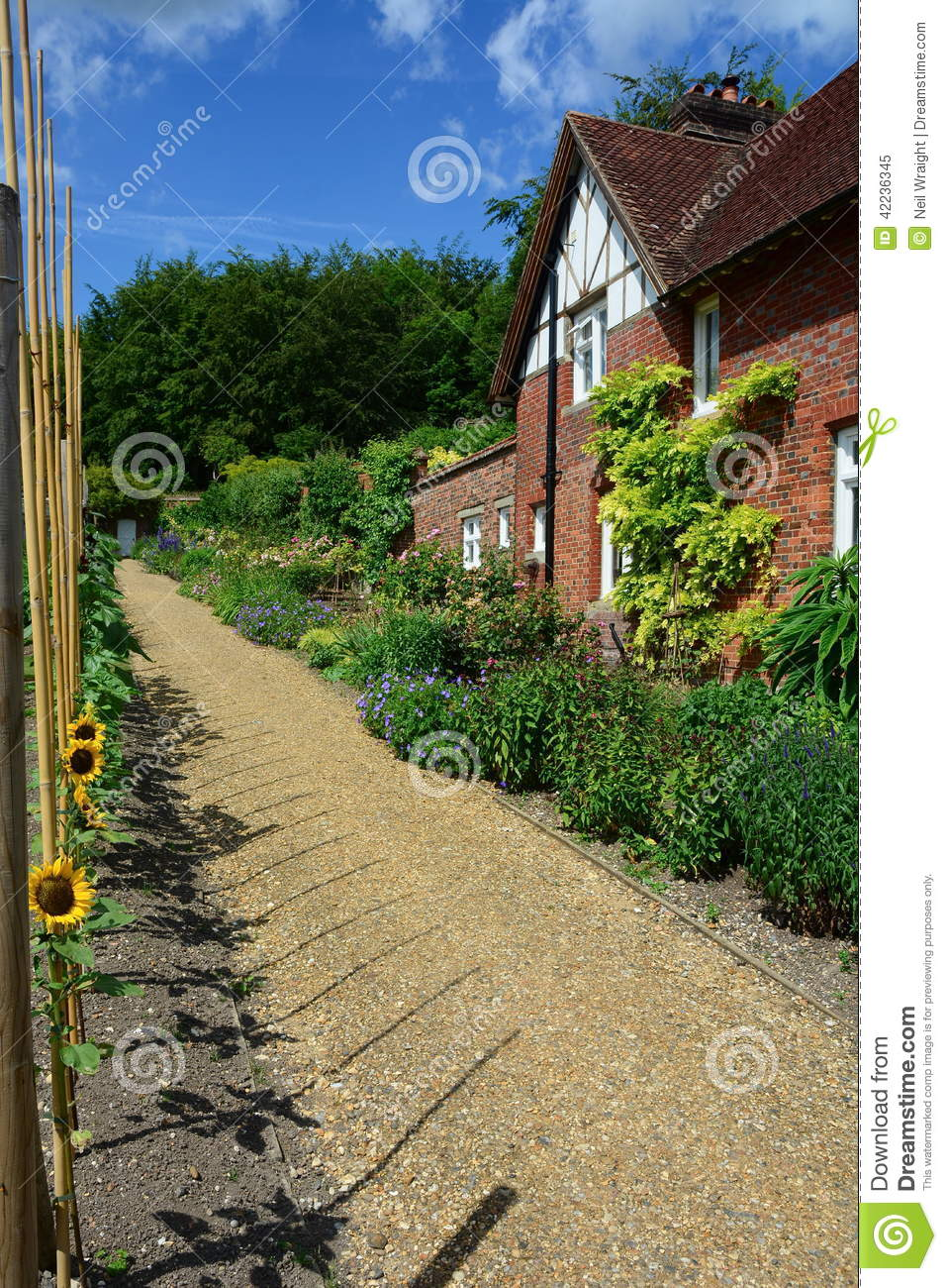 English country cottage and sunflowers stock image image 42236345 - Countryside dream gardens ...