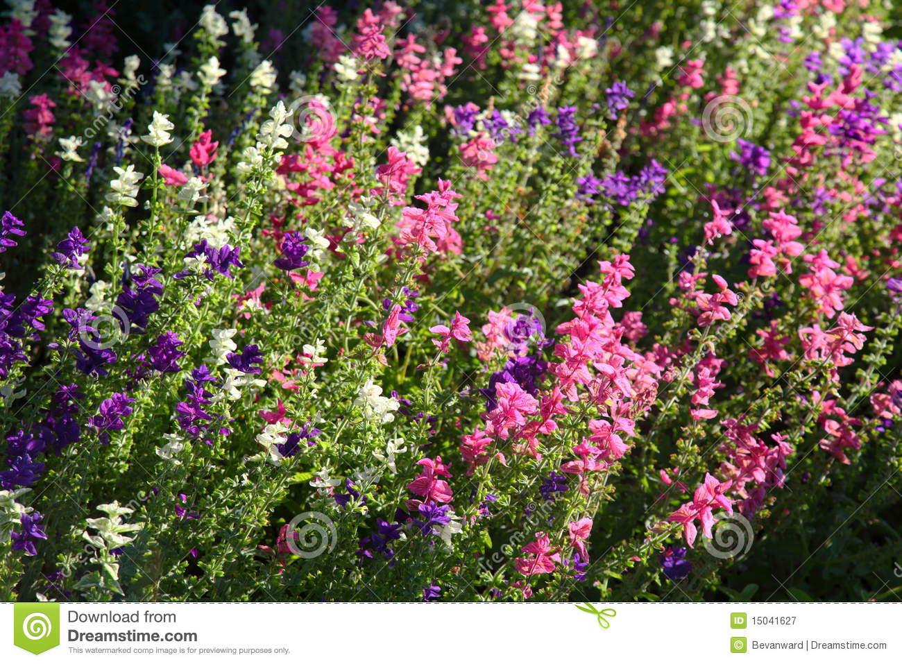 english country garden flowers stock image - image: 15041627