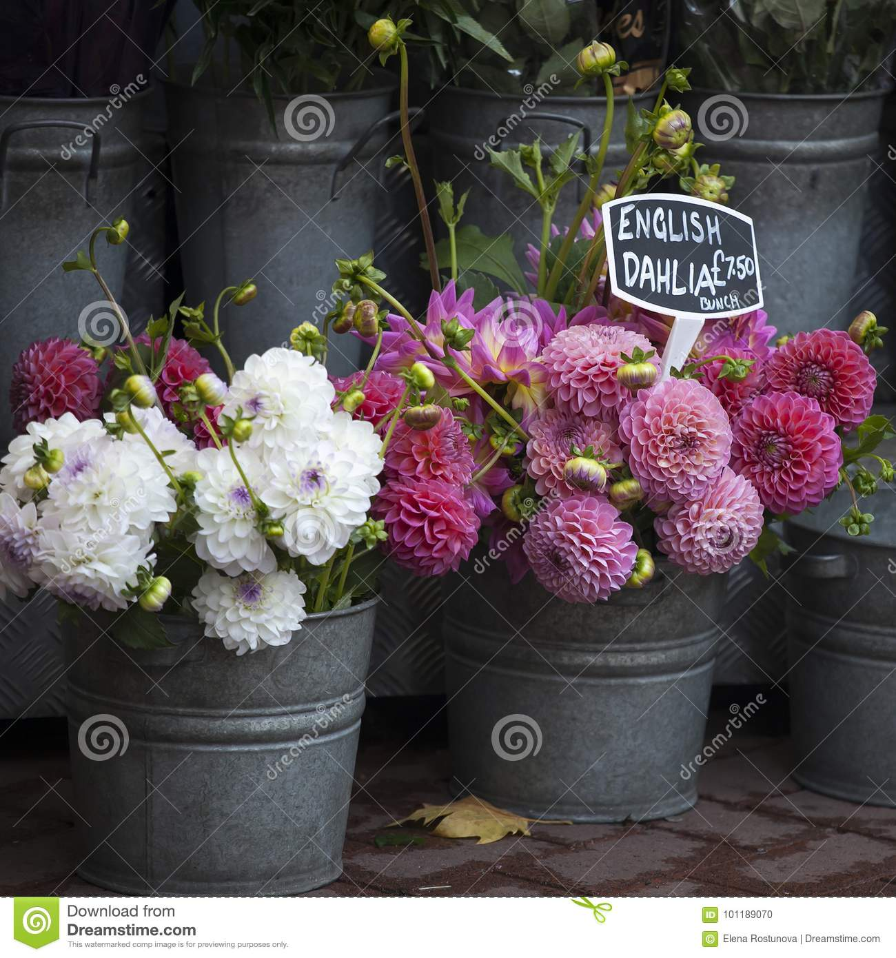 The English Dahlias For Sale In A Flower Stall Near The Metro Stock